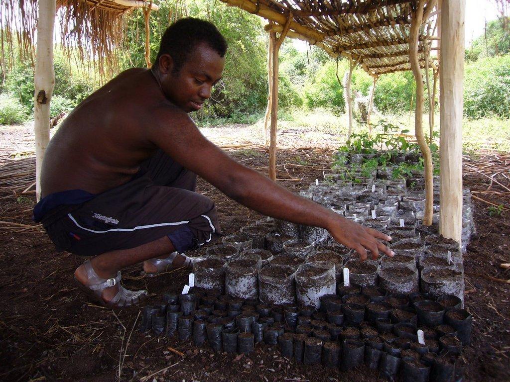 Malagasy Community Reforestation Institute