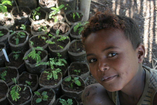 Malagasy Community Reforestation Institute