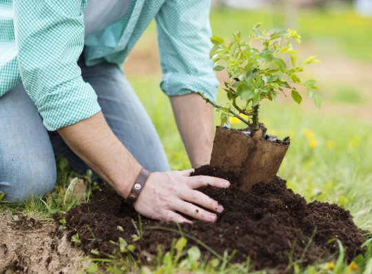 Plant a Tree in Karachi - Help Climate Change