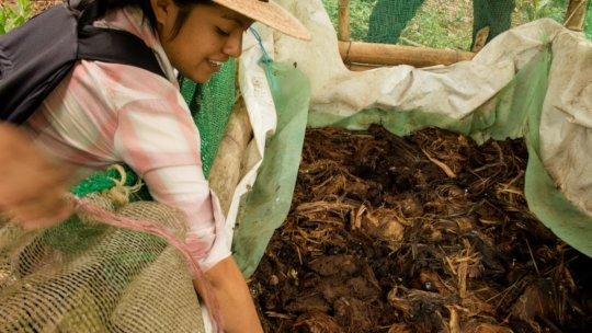 Checking Vermicompost condition