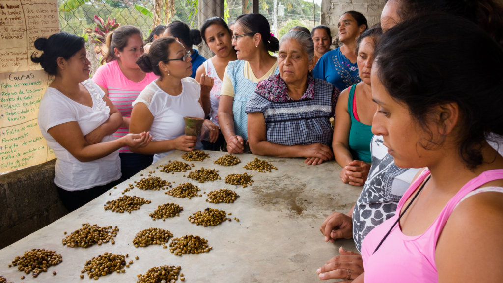Sustainably facing coffee rust threat in Mexico.