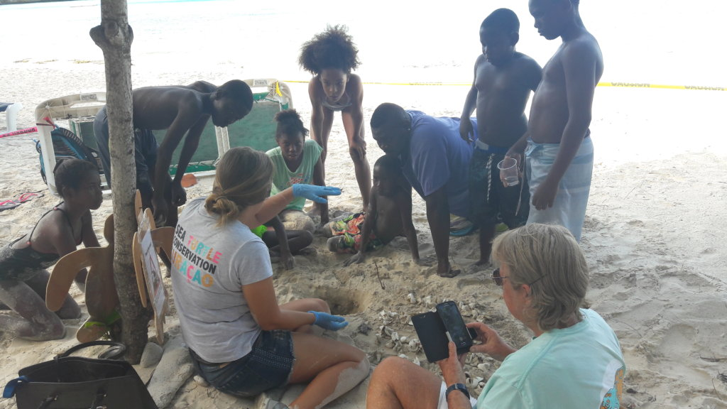 Help Protect Endangered Sea Turtles in Curacao