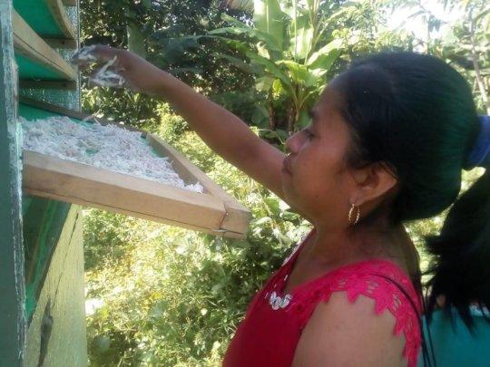 Drying organic yucca for gluten-free flour