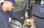 Emergency transport for pets in LA County