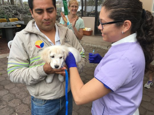 First dog vaccinated on the Galapagos!
