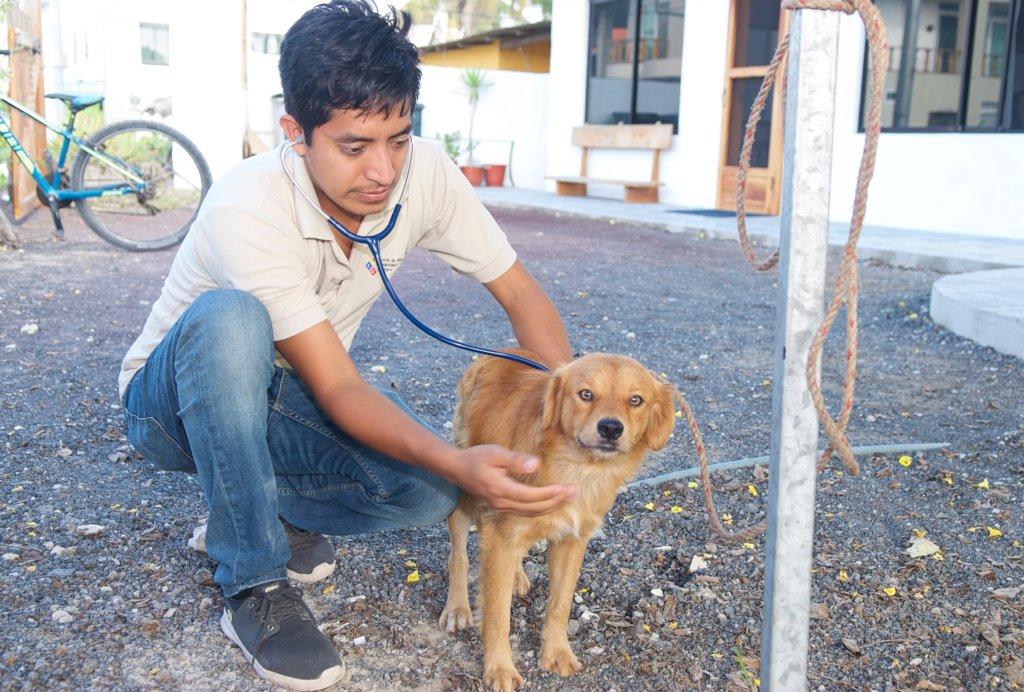 Vaccinate Dogs on the Galapagos Islands, Ecuador