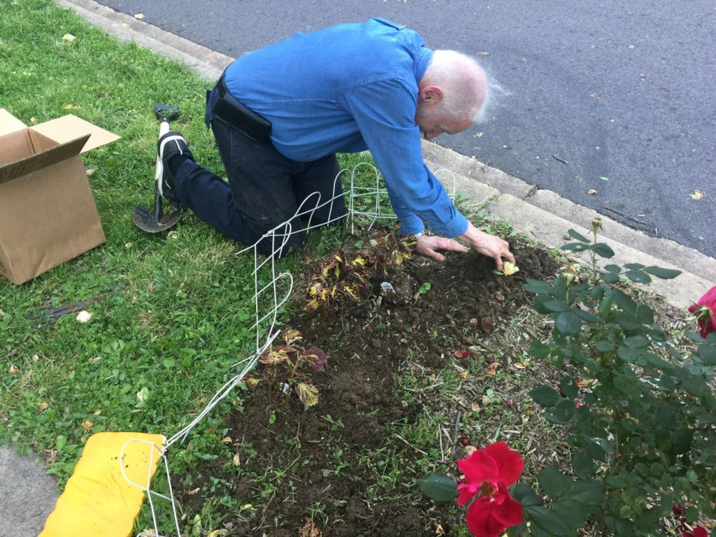 Planting bulbs in the Fall