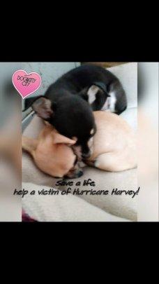 Harvey flood survivors