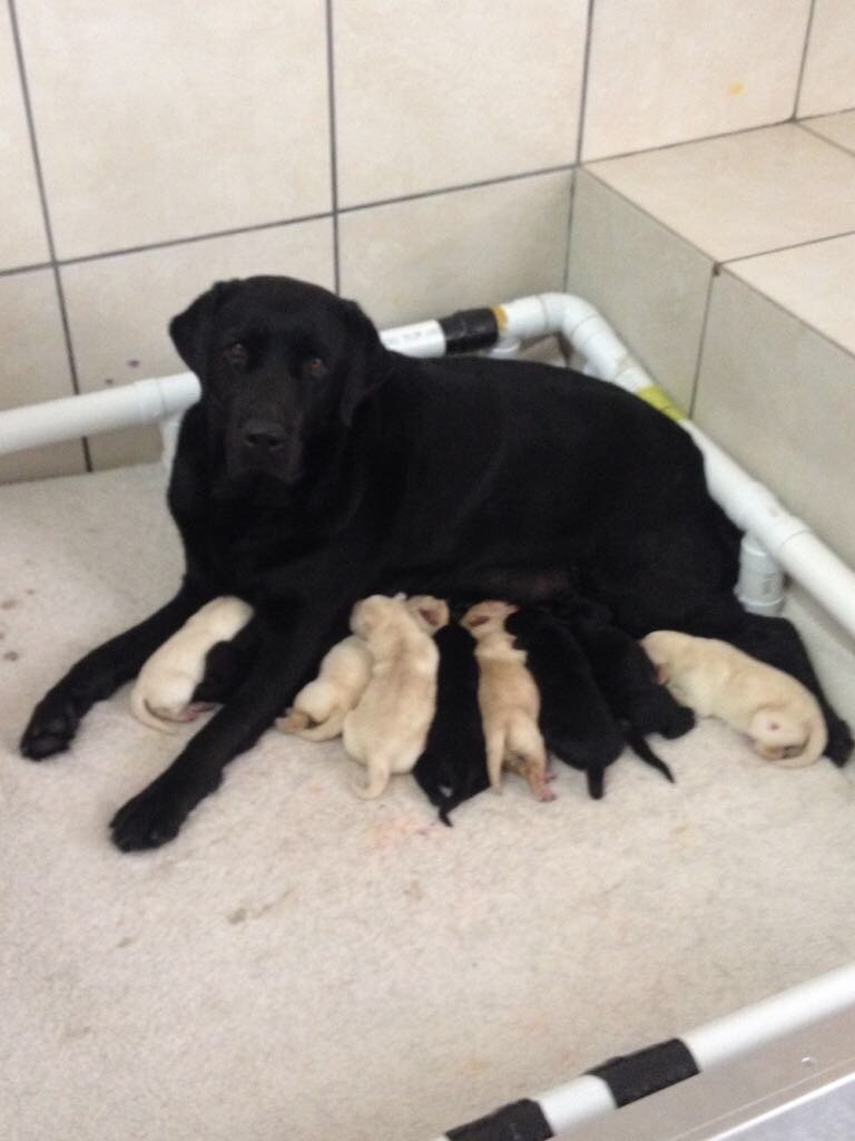 Renovate our Working Dog Breeding Centre in S A