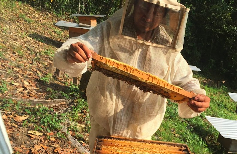 Moving 200 Beehives from Beekeepers in Chiapas