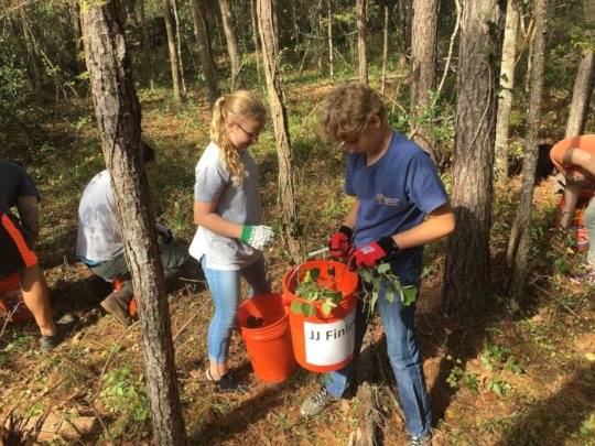 Youth volunteers removing invasive plants
