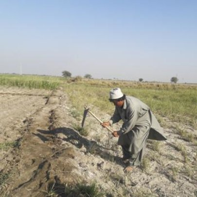 Farming for food AND income