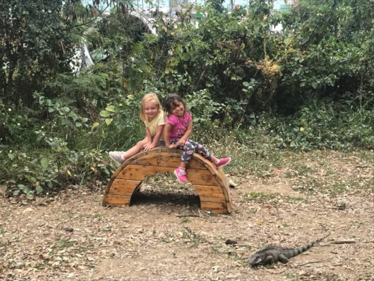 Friends are visited by an iguana.