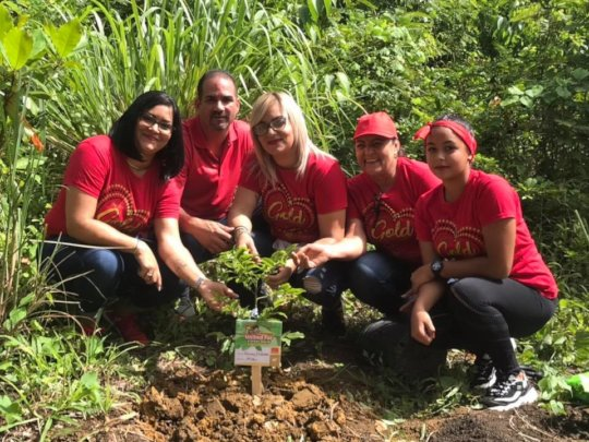 Reforestation efforts by Para la Naturaleza