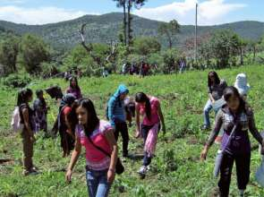 Promoters clearing land