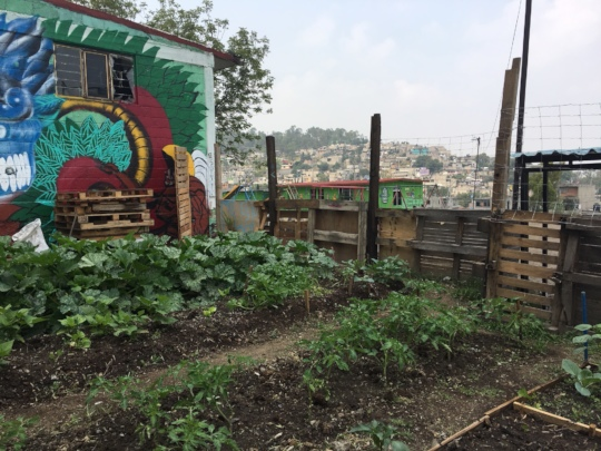 The community garden growing strong!