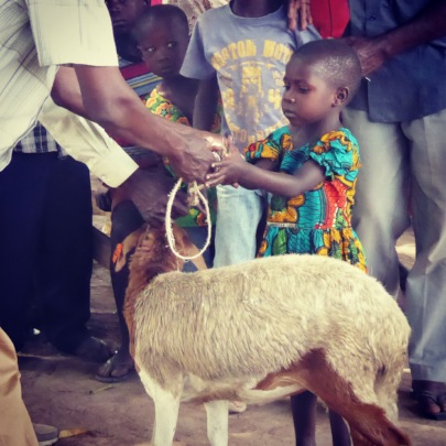 Orphan that recieved a pregnant goat