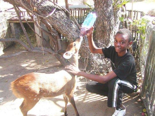 Johannes feeding the bushbuck