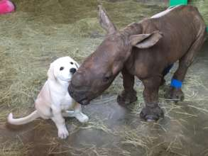 Esme the orphaned rhino with her friend David