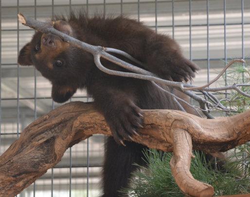 Kenai with a branch