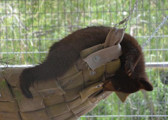 Kenai in his hammock