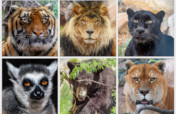 Help Feed Rescued Exotic & Wild Animals in Arizona