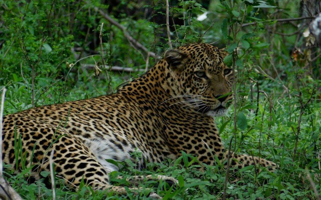 Support Maasai Mara Big Cat Wildlife Research