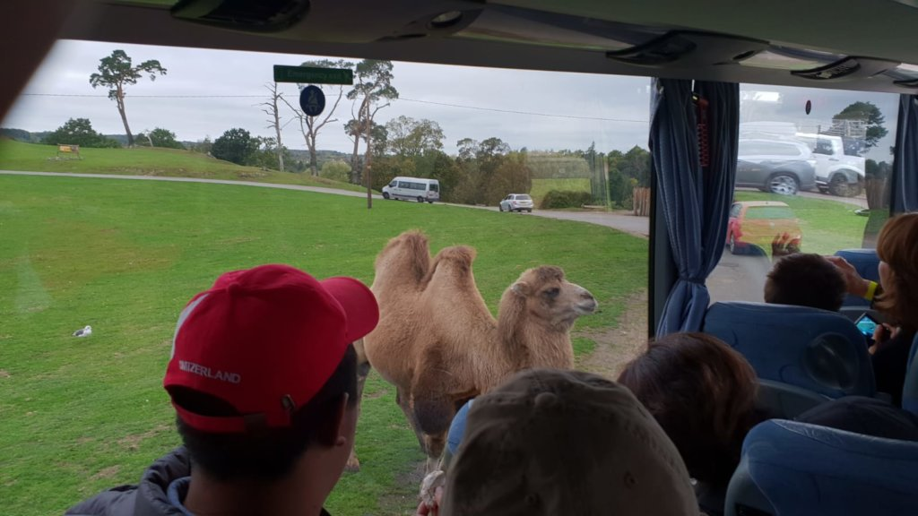 At the Safari Trip in West midland