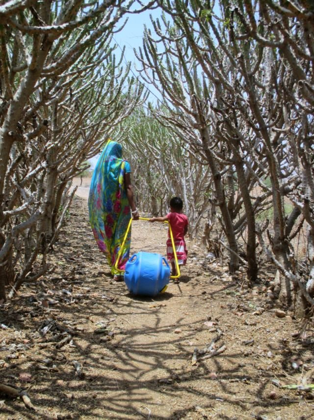 Access to Water for 600 Rural Indian Families