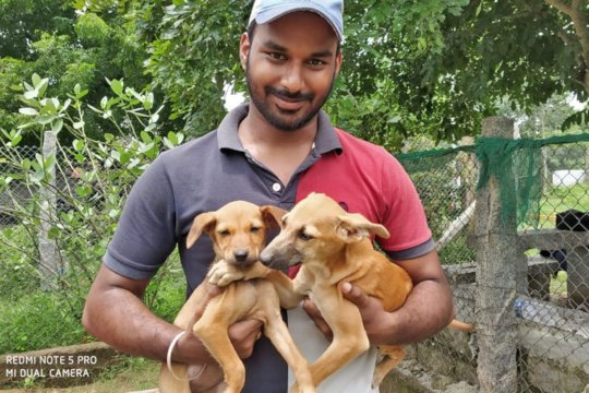 Lucky puppies getting adopted