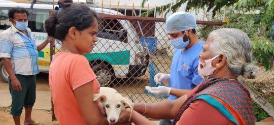 Anti-Rabies Vaccination Drive in progress