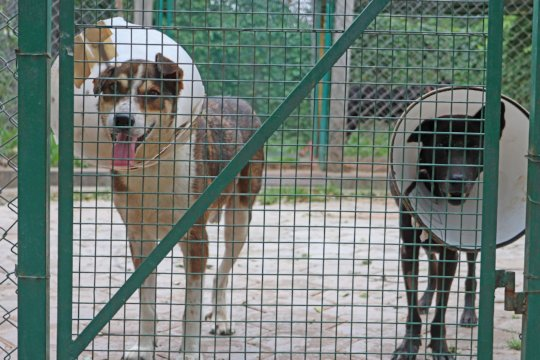 Sabu and Meena recovering well from surgeries