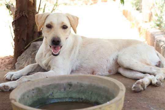Abandoned pet Helen waiting for her forever home