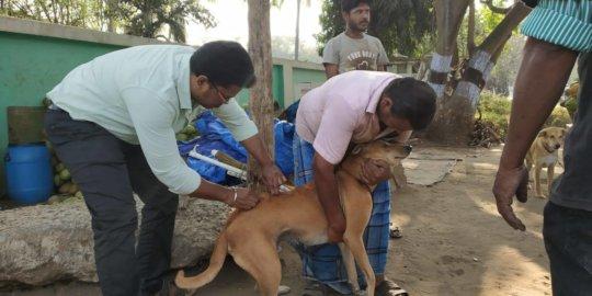 Anti-Rabies Vaccination Drive