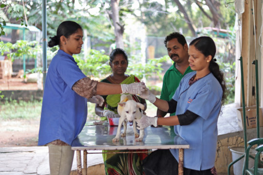Puppy getting treatment at the clinic