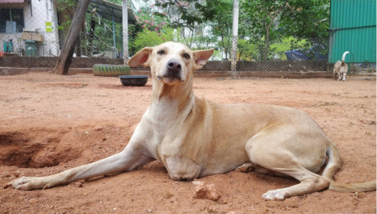 Madhavi - After her life-saving surgery