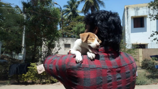 Popeye getting adopted