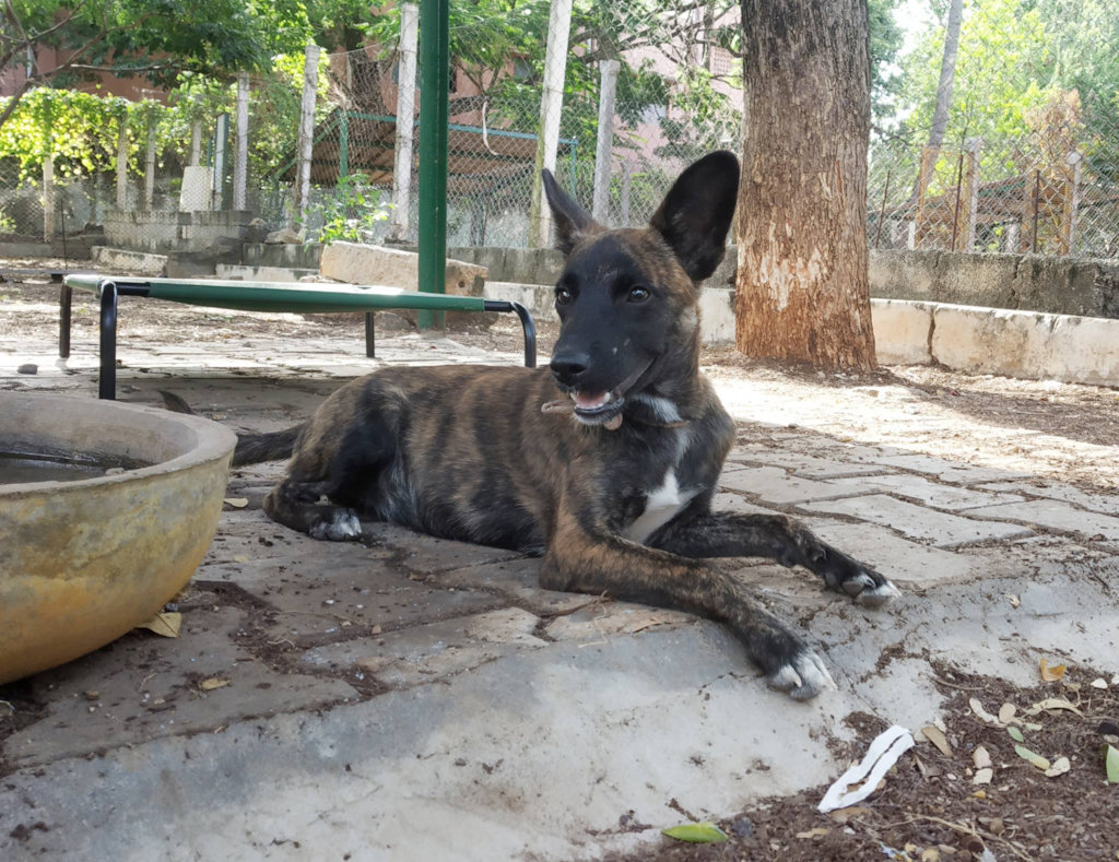 Reports from Humane Animal Society (HAS) - GlobalGiving