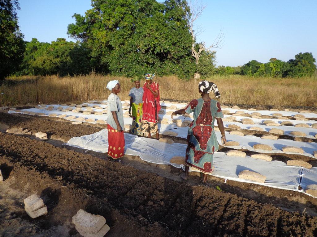 Drill 2 wells for 186 women farmers in Mali