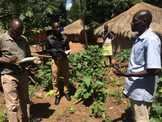 Farmer shows eggplant damaged by bacteria wilt