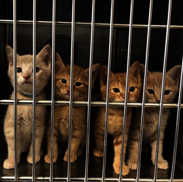 Save the Lives of Homeless Animals in Oregon