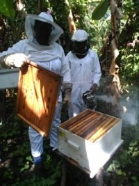 Train 180 Haitian Women in Beekeeping