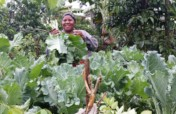 Establish Kitchen gardens for 500 Ugandan families