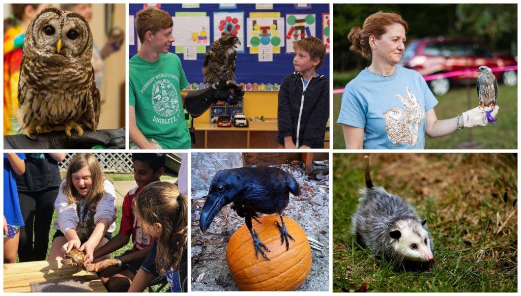 The Gail E. Abrams Wildlife Ambassador Fund