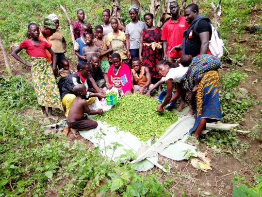 Help Liberian Farmers Save the Rainforest