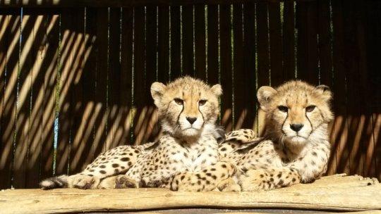 Jasmin and Jabez