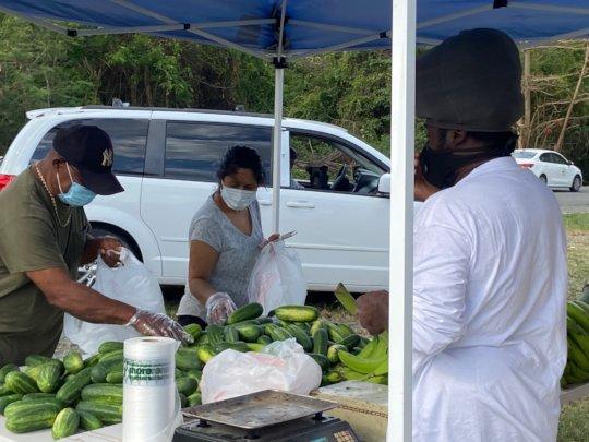 Farm Tiendas: Food Security Systems During Covid!