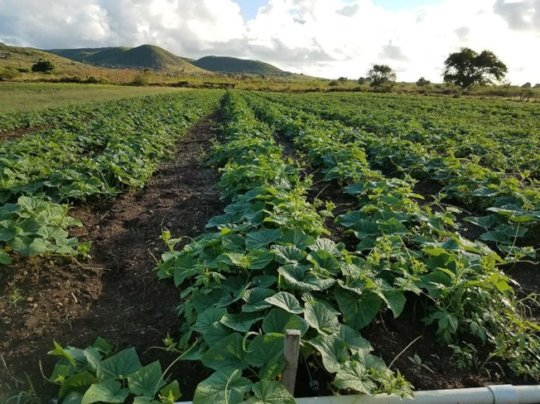 The Abundance of New Crops with Resilience Grants!