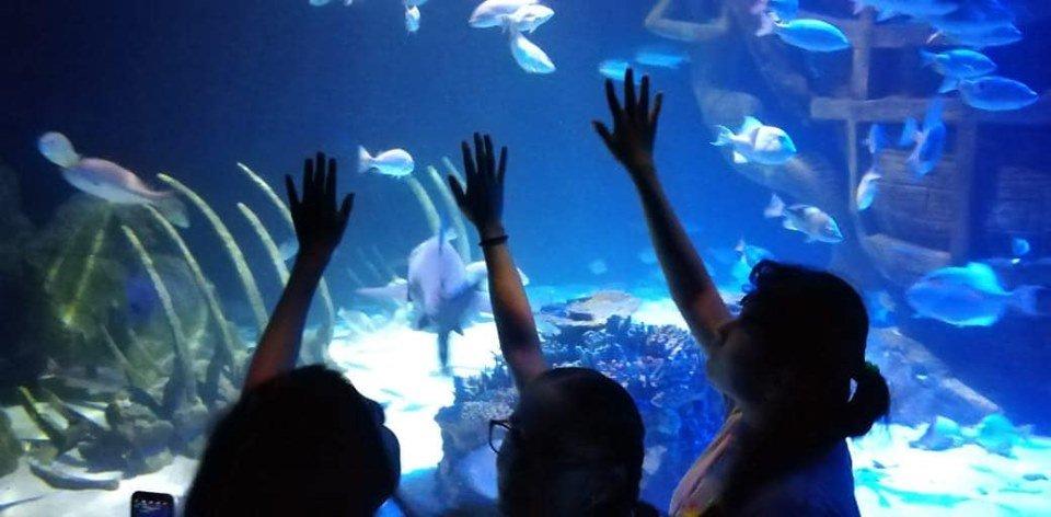 Young students visit sea life aquarium