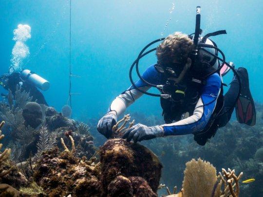 Coral Gardener Volunteer.